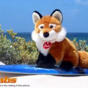 fox-contact
